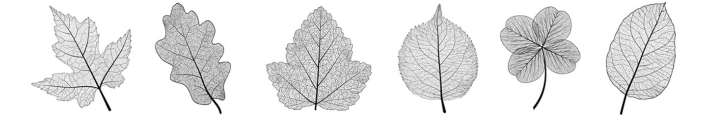 Set leaves on white. Vector illustration.