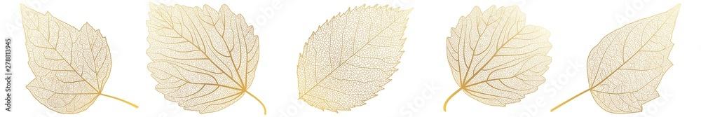 Fototapety, obrazy: Set leaves on white. Vector illustration.