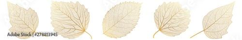 Fototapeta Set leaves on white. Vector illustration. obraz