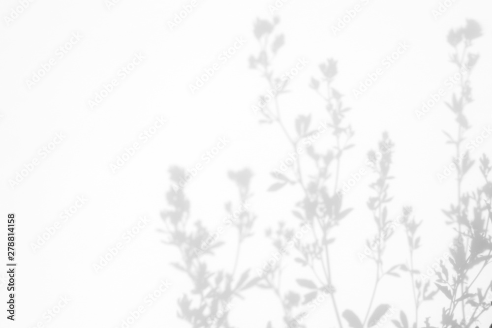 Fototapeta Gray shadows of the flowers and delicate grass on a white wall. Abstract neutral nature concept background. Space for text.