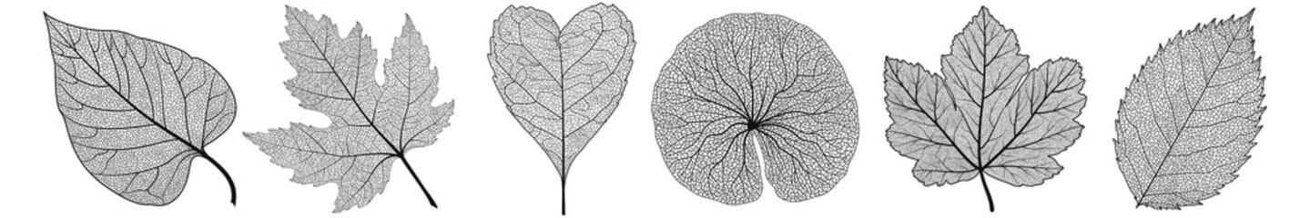 Postavite lišće na bijelo. Vektorska ilustracija.