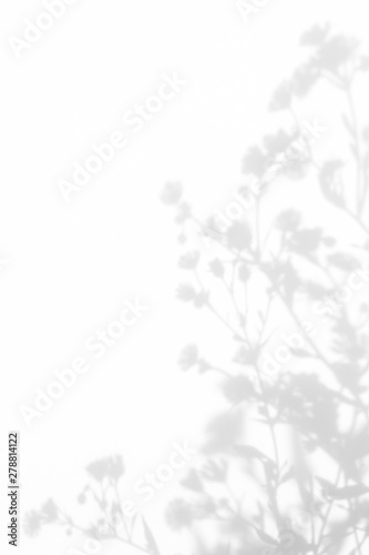 Gray shadows of the flowers and delicate grass on a white wall. Abstract neutral nature concept background. Space for text. - 278814122