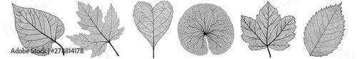 Obraz Set leaves on white. Vector illustration. - fototapety do salonu