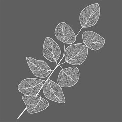 Obraz na Szkle Minimalistyczny Branch with leaves isolated. Vector illustration.
