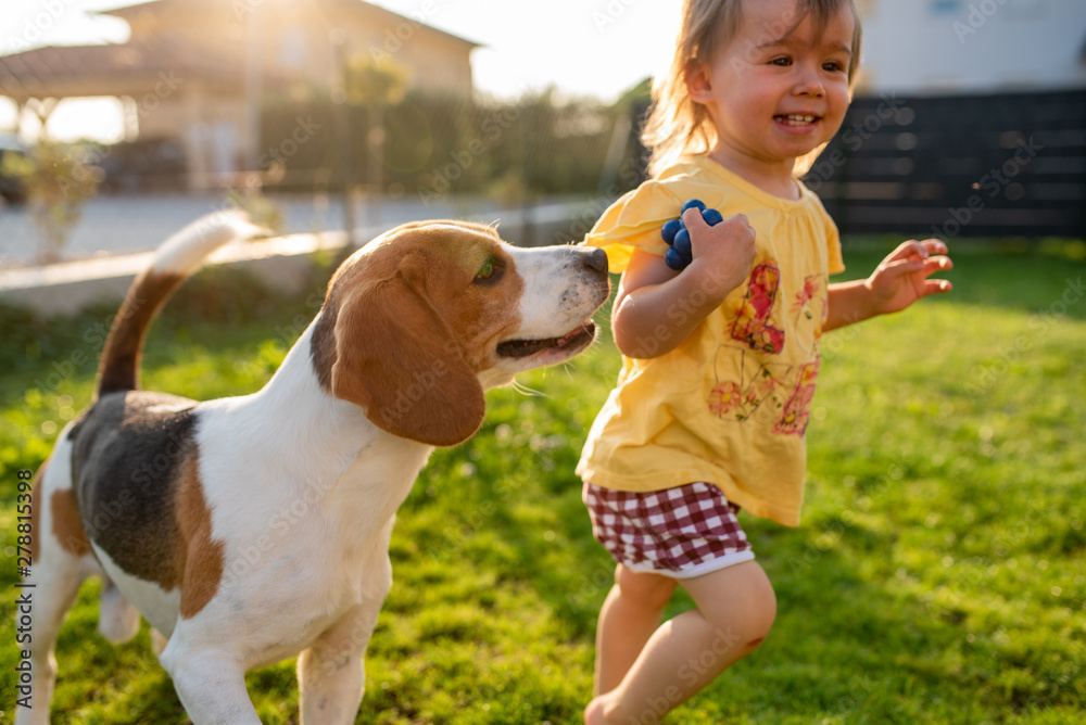 Fototapety, obrazy: Cute baby girl chased by beagle dog in garden in summer day.