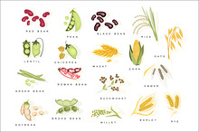 Cereal Plants With Names Set F...