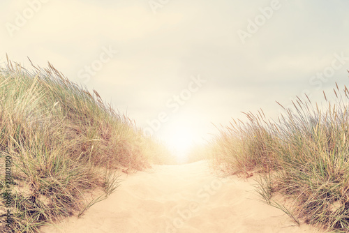 Foto auf Gartenposter Gras Dune with beach grass on Sylt island.