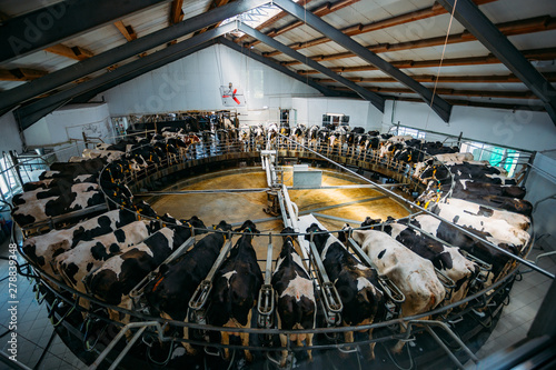 Robotic automatic industrial milking rotary system in modern diary farm Wallpaper Mural