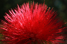 Closeup Exotic Flower With Viv...