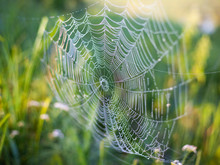Beautiful Wicker Web, Spider Wove A Large Web Of Spiderwebs For Insect Fishing, Background