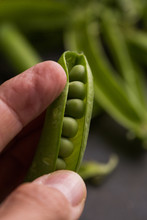 Fingers Opening A Pea Pod
