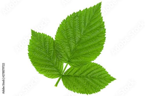Raspberry leaf  on white