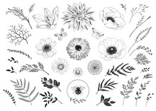 Big Hand Drawn Collection Of Floral Elements For Your Design. Vector Illustration Flowers, Branches, Leaves, Butterflies And Bee. Set Wedding, Invitation, Holiday And Greeting Decors.