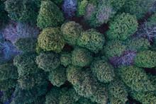 杉林の鳥瞰図