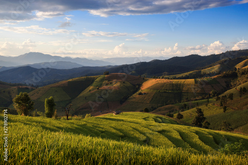 Fototapeta Rice Terrace at Ban Pa Pong Piang, Chiang Mai, Thailand obraz na płótnie