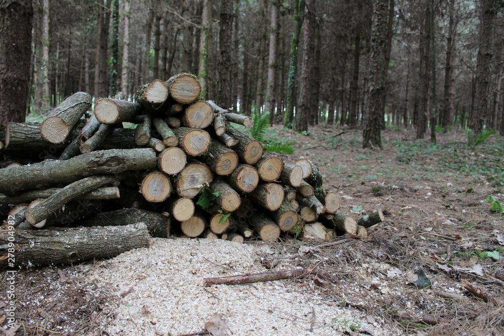 Valokuva Tas de bois dans la forêt