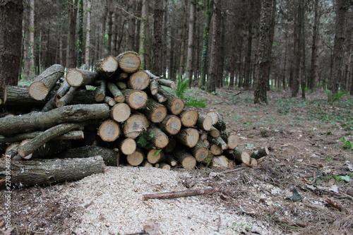Valokuvatapetti Tas de bois dans la forêt
