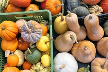 Pumpkins And Winter Squashes C...