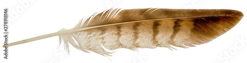 Valokuva Falcon feather isolated on white background.