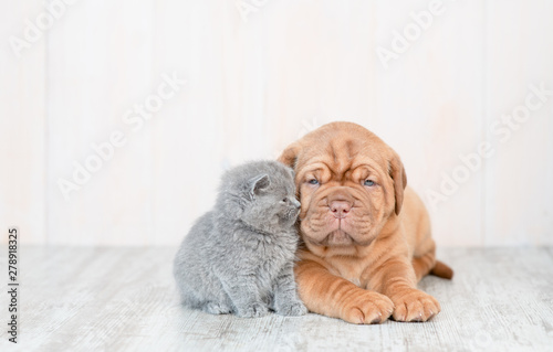 Fototapeta Mastiff puppy lying with baby kitten on the floor at home. Empty space for text obraz na płótnie