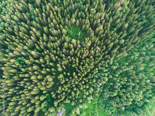 Fototapeten Wald Aerial view of green boreal forest filled with spruce trees