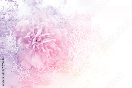 Poster Floral Unfocused blur rose petals in pastel tone for background