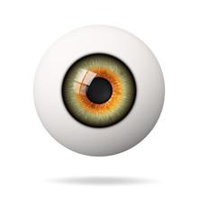 Realistic Human Eyeball. The R...