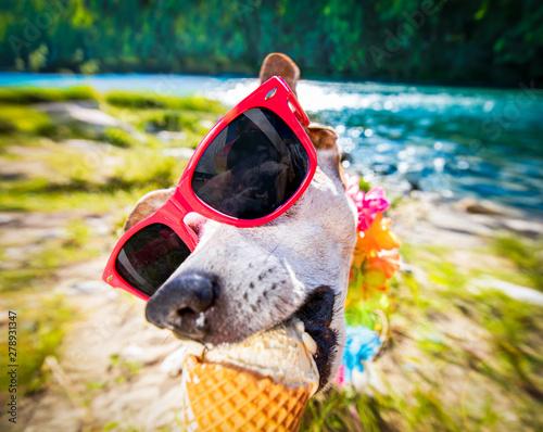 Spoed Foto op Canvas Crazy dog dog summer vacation licking ice cream