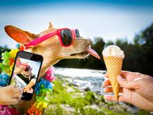 Dog  Summer Vacation   Licking Ice Cream
