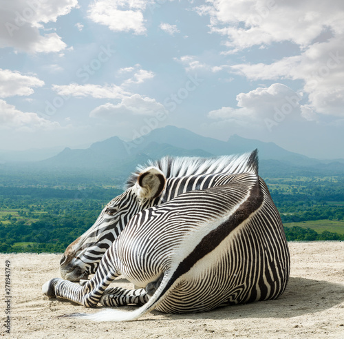 Photo Stands Zebra Grevy - zebra
