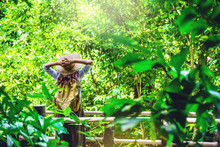 The Girl Is Happy To Travel To The Mangrove Forest. She Is Walking On The Bridge And Raising Her Hand. Stand To See Nature, Trees, Leaves In The Green. Travel, Backpack, Nature, Tourism, Rural, Style.