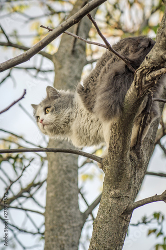 Garden Poster Koala Beautiful cat sitting on a tree