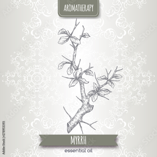 Fotografie, Obraz Commiphora myrrha aka common myrrh sketch on elegant lace background