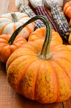 Decorative Pumpkins And Indian Corn On Rustic Wood Surface.