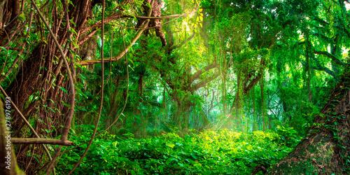 Obraz Dschungel - fototapety do salonu