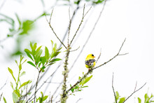 Rear View Of A Goldfinch Bird Perched On A Tree Branch