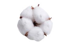 Soft Cotton Flower