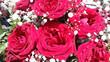 Leinwanddruck Bild - Rose rosse