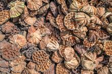 Dry Seed Pod Of Lotus