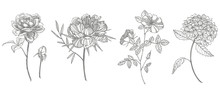 Bouquet. Spring Flowers And Twigs. Peonies, Hydrangea, Rose. Vintage Botanical Illustration. Black And White Set Of Drawing Cornflowers, Floral Elements, Hand Drawn Botanical Illustration.