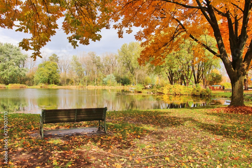 Foto op Aluminium Bomen Midwest nature background with park view. Beautiful autumn landscape with colorful trees around the pond and bench in a city park. Lakeview park, Middleton, Madison area, WI, USA.