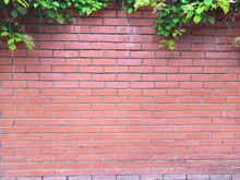 Beautyful Ivy Leaves Green Foliage Natural Floral Plant And Red Brick Fence In Sunlight