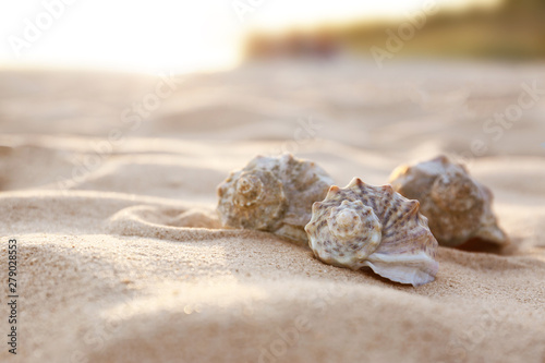 Fototapeta Different seashells on sandy beach. Space for text obraz