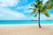 Tropical sand beach with palm tree