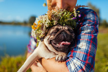 Man Holding Pug Dog With Flower Wreath On Head. Man Walking With Pet By Summer Lake