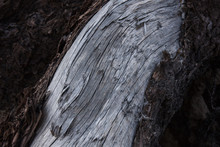 Metallic Drift Fir Wood Texture