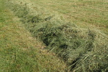Gemähtes Gras Als Schwade