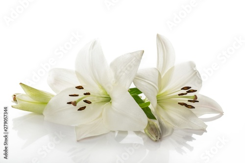 white lily flower - 279057344