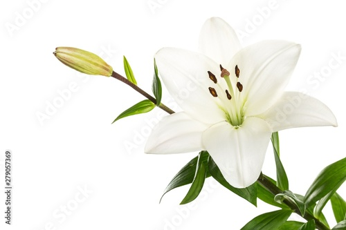 white lily flower Billede på lærred