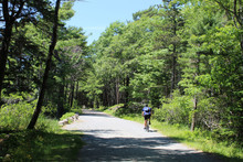 Man On A Bicycle On A Carriage Trail At Acadia Naitonal Park